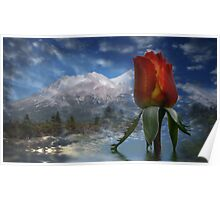 Red Rose and Mount Shasta Poster
