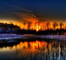 Lillie Park Sunset by Murtasma
