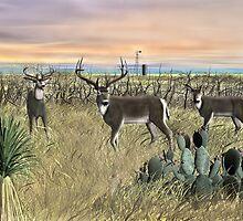Field Deer by Walter Colvin