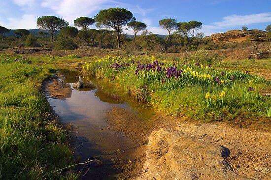 Provence springtime by Patrick Morand