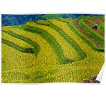 Rice Terrace. Poster