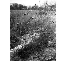 Frozen Winter Field Photographic Print