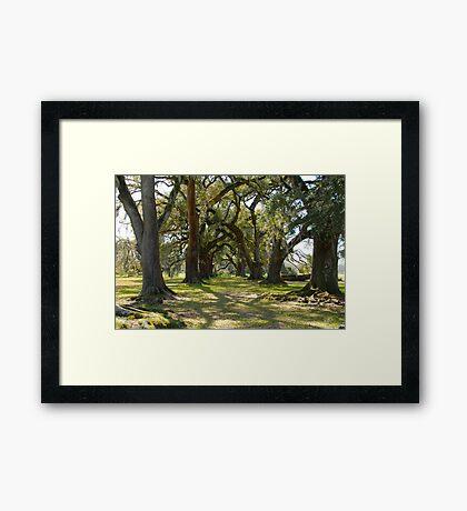 Old Giants Framed Print