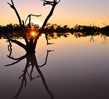 Outback Sunrise by Meg Forbes