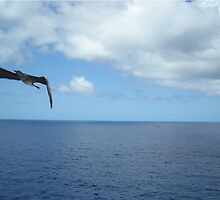 Booby Bird in flight by judygal