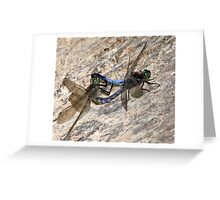 Mating Black-tailed Skimmer Dragonflies Greeting Card