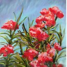 Oleander in Mexico by SaraDiane