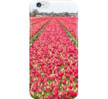 Dutch Tulips part 7 iPhone Case/Skin