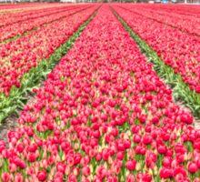 Dutch Tulips part 7 Sticker