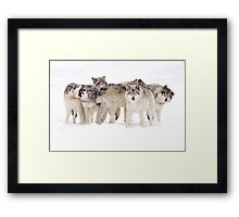 Dysfunctional Family - Timber Wolf Framed Print