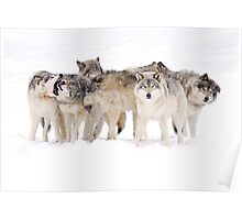 Dysfunctional Family - Timber Wolf Poster