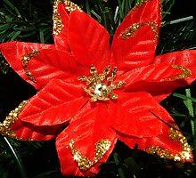 Christmas Wish by Melissa Contreras