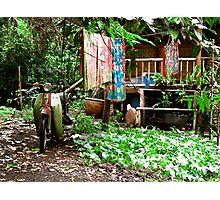 Rainforest Dwelling Photographic Print