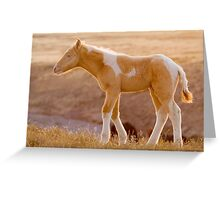 Little Pinto Colt Greeting Card