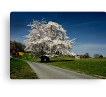 Full Bloom! Canvas Print