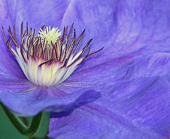 Purple Passion  by Moninne Hardie