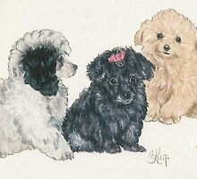 Poodle Puppies by BarbBarcikKeith