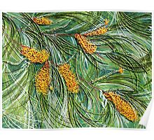 Golden Bottlebrush Poster