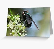 my photographs Greeting Card