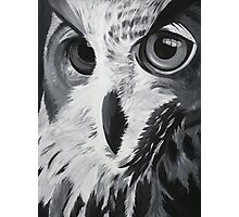 Bird of Prey Photographic Print
