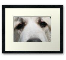 Dog love Framed Print