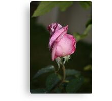 DAMPENED TO PERFECTION Canvas Print