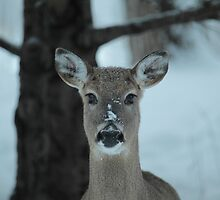 Winter deer in the snow and frost. by AgapeMn