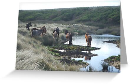 wild horses  by KimmyEvans
