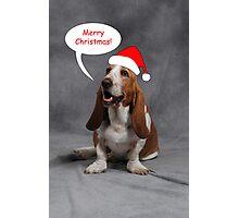 Christmas Basset Photographic Print