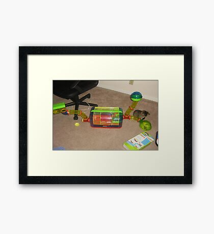 Come Out & Play Framed Print