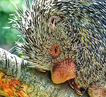 Snuggly when He's Sleeping by Beth BRIGHTMAN