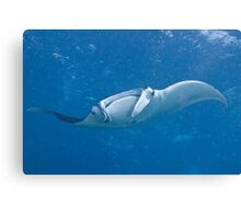 Manta Dance Canvas Print
