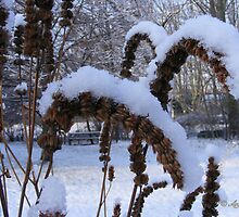 Hyssop seed heads in Snow by Andy2302