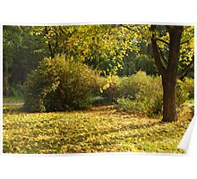 Autumn in park Poster