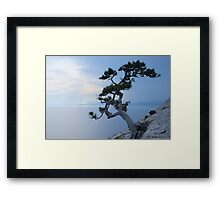 Alone tree on the cliff Framed Print