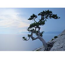 Alone tree on the cliff Photographic Print