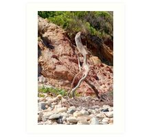 Walking Stick Art Print