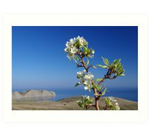 Blooming tree above the sea Art Print