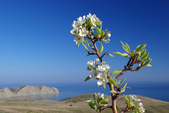 Blooming tree above the sea by lvinst