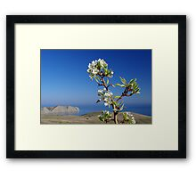 Blooming tree above the sea Framed Print