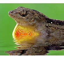 Dragon Of The Pond Photographic Print