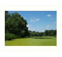 Sunny summer day on  marsh Art Print
