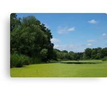 Sunny summer day on  marsh Canvas Print