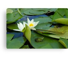 Frogs sitting on the water lily pads Canvas Print