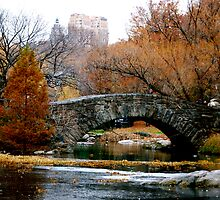 Central Park  by Robin Robb