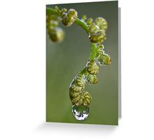 Fern with water droplet Greeting Card