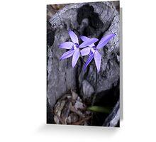 Orchid. Flinder Ranges Sth Aust. Greeting Card