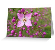 Boronia flower Greeting Card