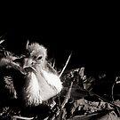Alone In The Nest by Carlo Cesar Rodillas