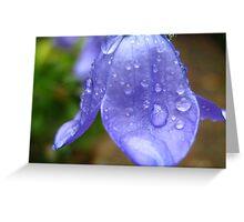 campanula in the rain Greeting Card